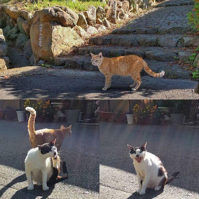 須磨裏の猫(ΦωΦ)